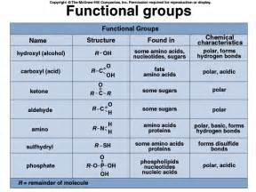 testosterone definition and function picture 3