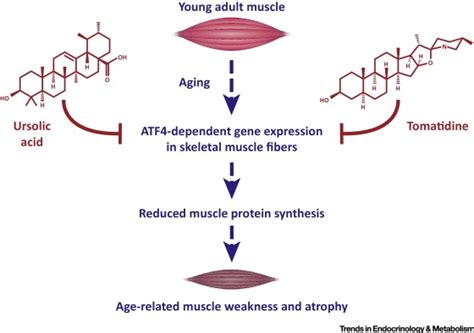 ageing amino acids picture 7