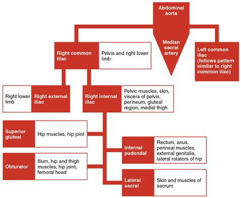 artery blood flow picture 18