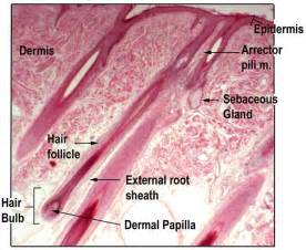 microscopic human skin parasites picture 9
