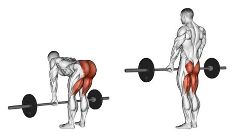 gain lean weight while lifting picture 13