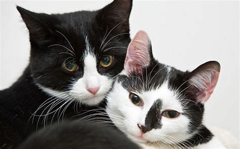 why cats loose their appees picture 13
