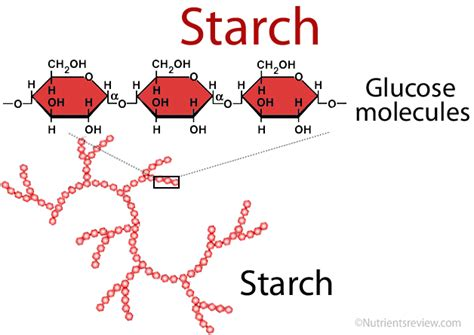 chemical structure of starch picture 5