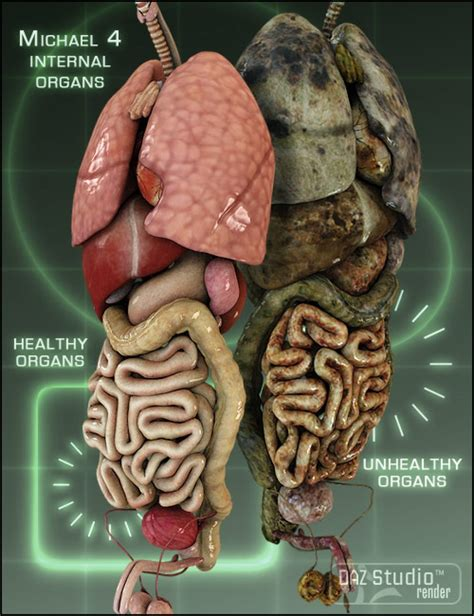 where is the liver in a human body picture 8