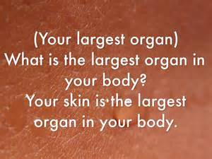 skin is your largest organ picture 7