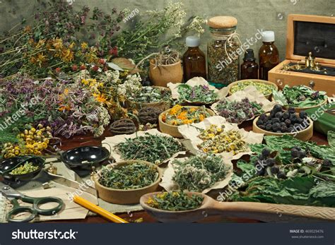 what herbal medicine in the philippines can use picture 8