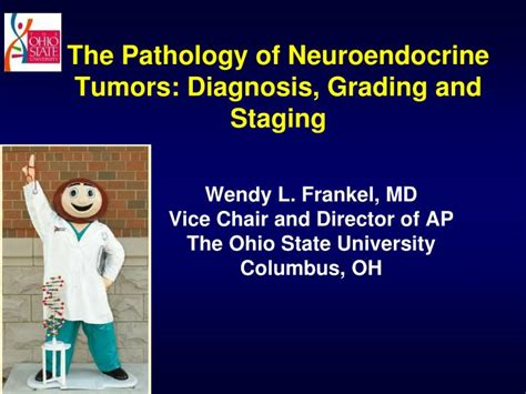 neuroendocrine tumor of gastrointestinal tract ppt. picture 4