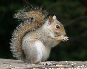 picture of squirrel h picture 5