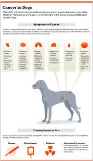 canine thyroid cancer symptoms picture 19