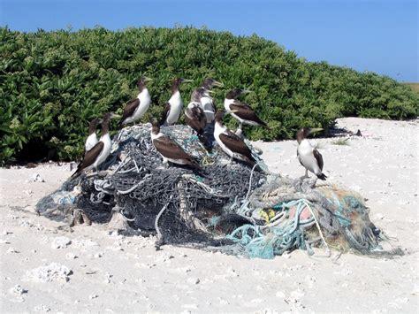 marine debris picture 11