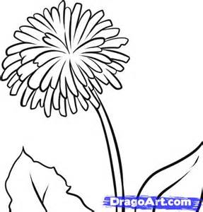 dandelion coloring picture 3