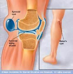 fluid joint supplements picture 5