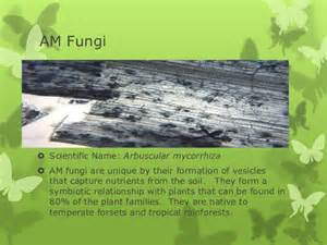 scientific names for fungi picture 15