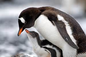 penguin diet picture 9