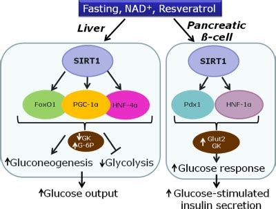 aging and pancrease picture 13