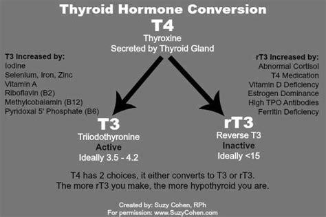 armour thyroid and levothyroxine taken together picture 15