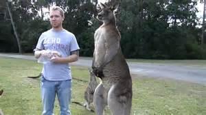 average penis size australia picture 2