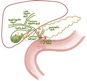 importance of the gall bladder picture 7