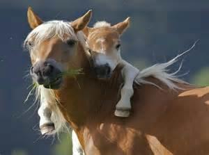 poze cu cai care fata picture 9