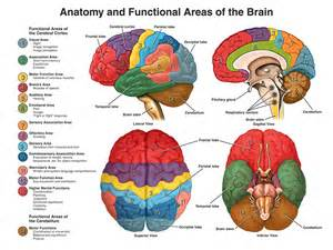 a study of the mind muscle and its picture 7