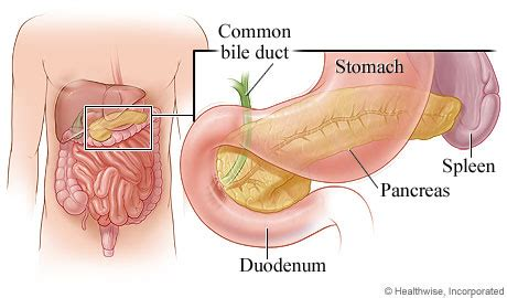 function of gall bladder picture 3