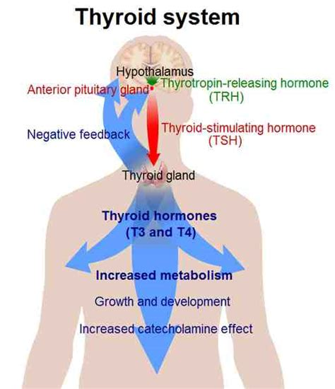 super high thyroid hormone picture 1