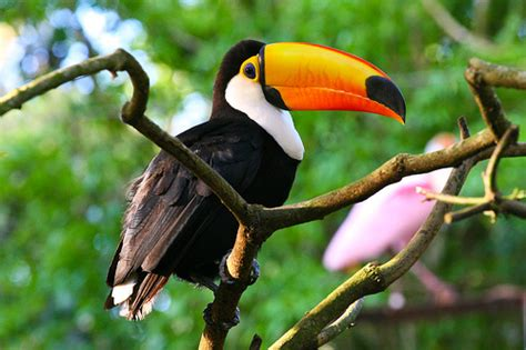 diet of a toucan picture 1