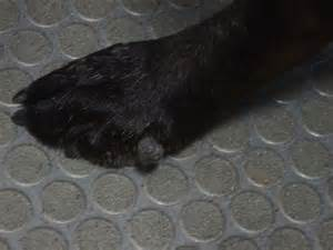 cyst & boils in dogs picture 6
