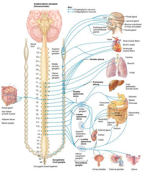 gall bladder & celiac desease picture 13