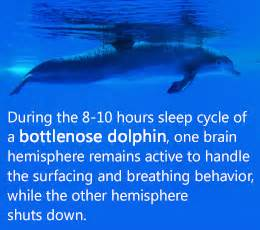 dolphins sleeping habits picture 9