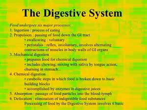 7 digestive enzymes picture 7
