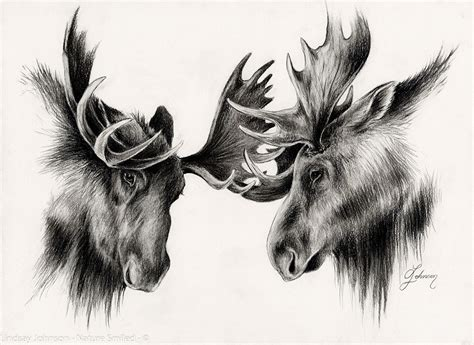 antler test picture 3
