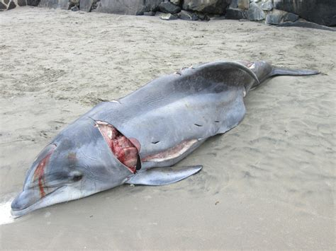 a dolphin's diet picture 11