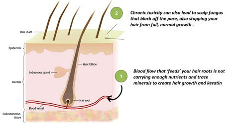 can msm cause hair loss picture 7