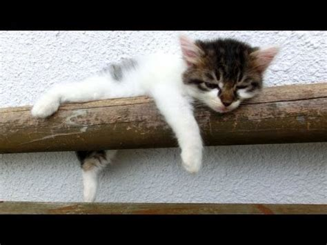 cat sleeping a lot picture 6
