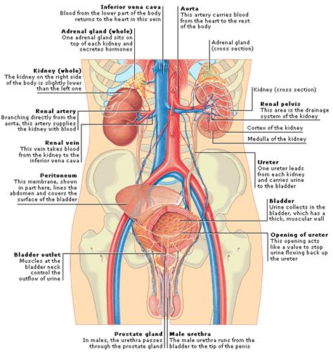 m on your bladder picture 5
