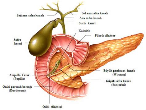 cancer of the gall bladder picture 14