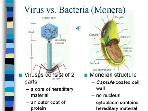 bacterial versus viral infection picture 1