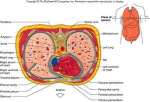 fluid around the bladder picture 1