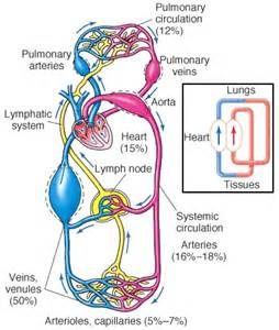 figure 8 of blood flow picture 10