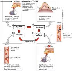 testosterone cycle blood pressure picture 2