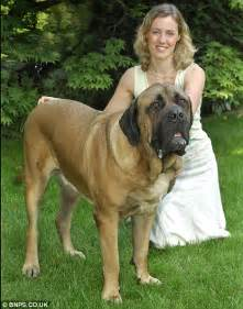 how big is a mastiff penis picture 10