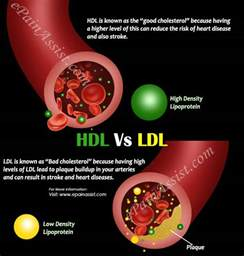 Cholesterol hdl and ldl all elevated picture 4