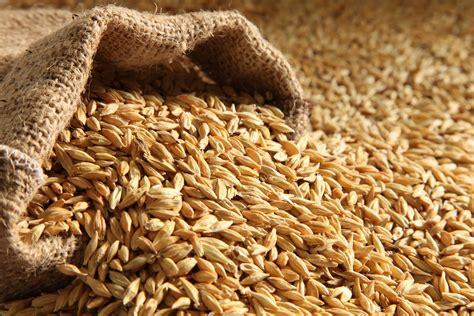malt grain digestion picture 17