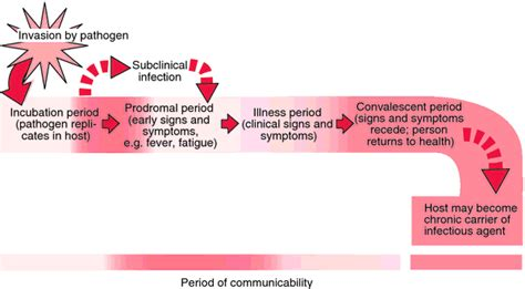 the different stages of bacterial infection picture 5