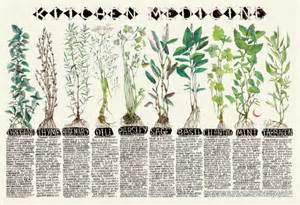 herbal medicine mx 3 picture 3