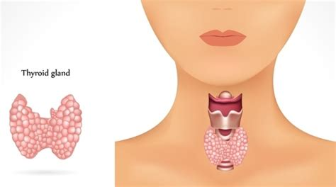 foods that activate thyroid picture 3