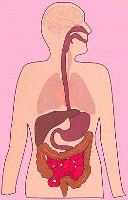 digestion animation picture 2