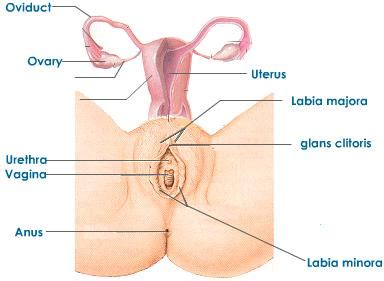 women relieving a male penis picture 18