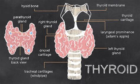 thyroid and body feeling cold picture 3